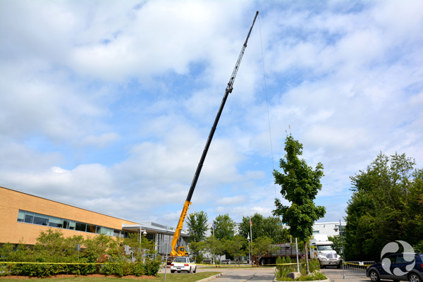 A crane in front of the building.