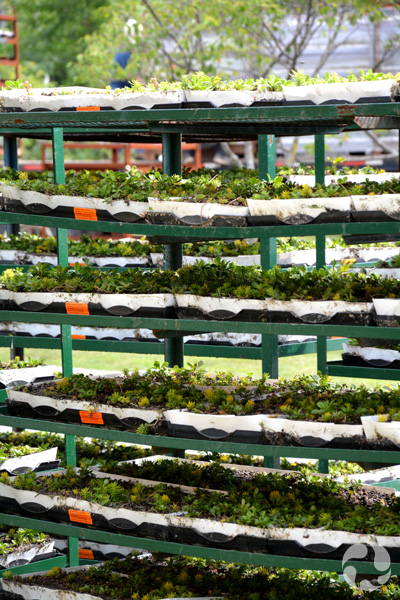 A rack of plant trays.