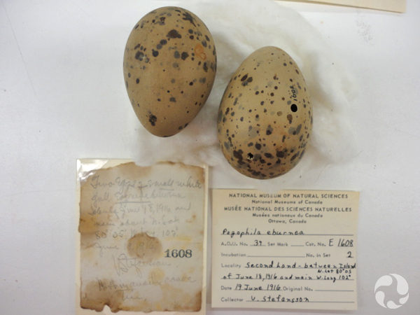 Two eggs on a table by a handwritten note and a collection tag.