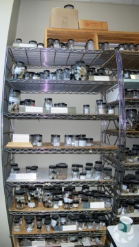 Shelves with jars containing marine specimens.