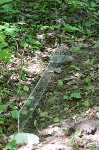Two pieces of plexiglass near trap, positioned upright on forest floor.