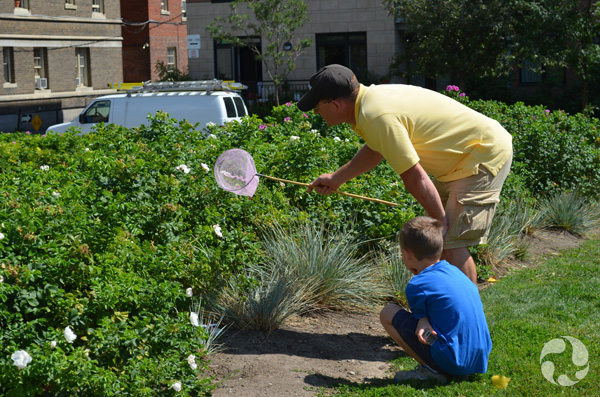 A man extends a butterfly net towards a hedge while a boy looks on.