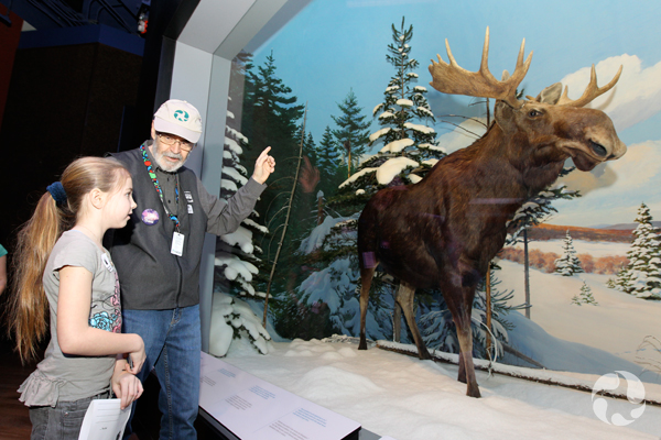 An adult and a child talk together in front of a mammal diorama.