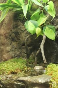 Plants, rocks and water inside a terrarium.