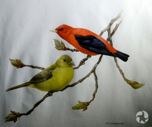 A painting of a male and a female Scarlet Tanager (Piranga olivacea) on a branch.