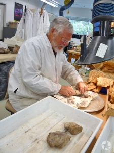 A man works at a lab table covered with fossils, trays and newspaper.