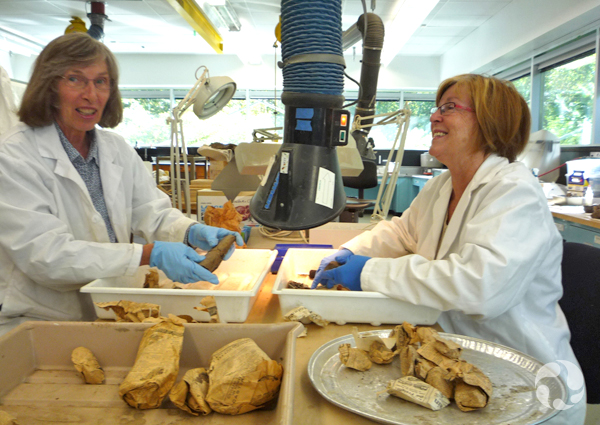 Two women sit across a lab table covered in fossils, trays and newspaper.
