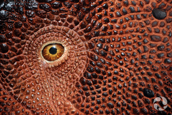 Close-up of an eye on a model of a Vagaceratops irvinensis dinosaur.