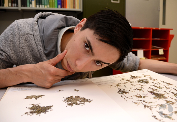 Student Shan Leung leans over sheets with specimens of both Ross' and elegant sandwort plants.