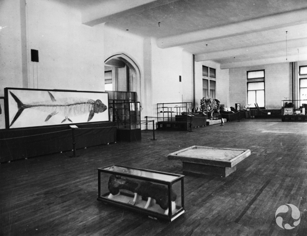 View of large room, with displays of fossils, including a large fish.