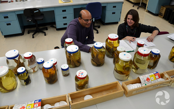 Noel Alfonso and Susan Swan crouch behind a large table upon which rests numerous jars with fish in them.