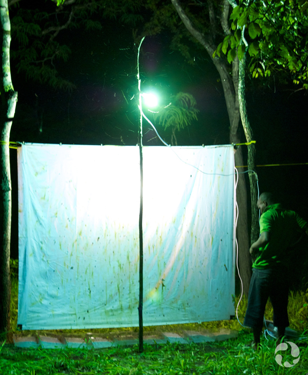 A bed sheet hangs on a line strung between two trees.
