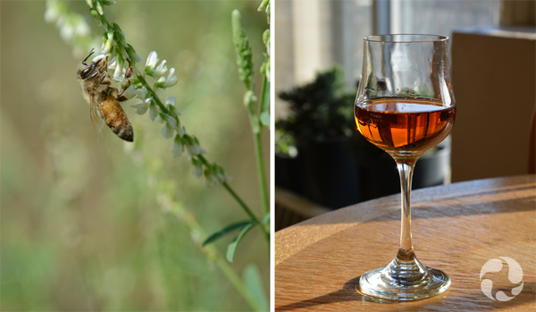 Collage: An insect pollinator on a plant and a glass of mead on a table.