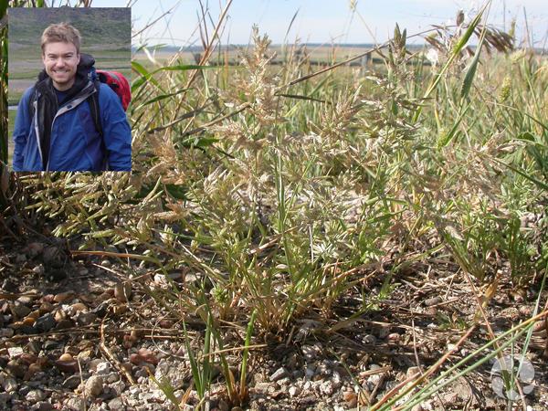 Collage: Jeff Saarela and grass growing in its habitat.