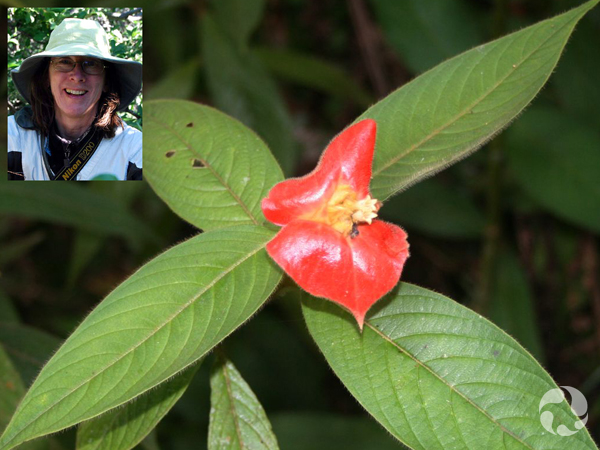 Collage: Lynn Gillespie and a hot lips plant.