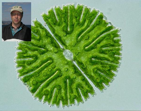 Collage: Paul Hamilton and a single algal cell.