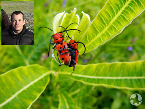 Collage: Paul Sokoloff and a milkweed plant with two beetles.