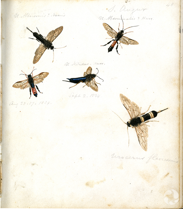 Five insect illustrations on one page.