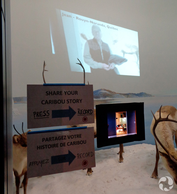 The caribou (Rangifer tarandus) diorama with video projected on the back wall, and signs and a mobile computer taped to the front glass.