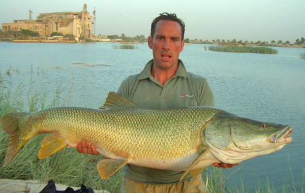 A soldier holds up a large example of Luciobarbus esocinus that he caught with hook and line at Camp Slayer, Baghdad, Iraq (32-34 kg, 1.32 m, released alive). Known as a Tigris salmon, it is actually a member of the Carp family.