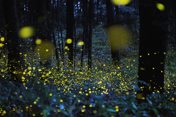 A forest at night, illuminated by many points of light.
