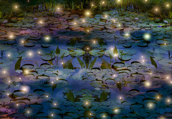 Small points of light above a pond at night.