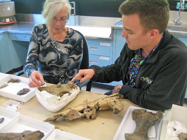 Jordan Mallon and Margaret Currie examine dinosaur fossils on table at the museum's research facility.