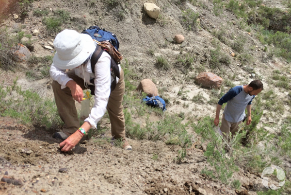 Two people on hillside collect remains of a dinosaur.
