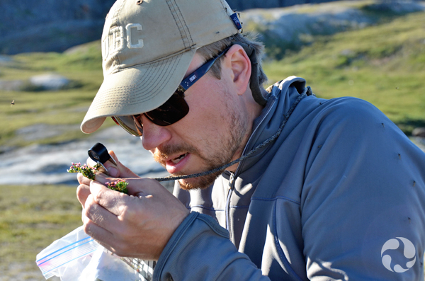 Jeff Saarela studies a plant using a hand lens.
