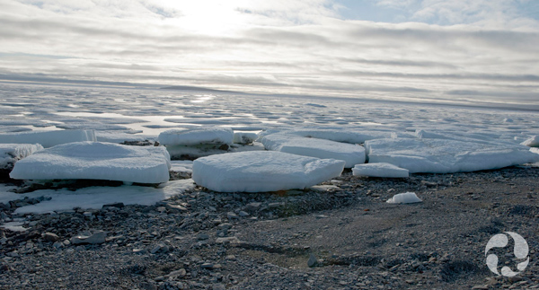 Ice floes in the water, up to the shoreline.