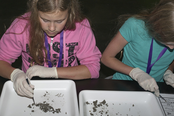 Two girls dissect owl pellets at a table.