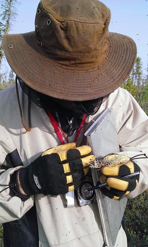 Botanist Troy McMullin wears bug protection clothing as blackflies swarm around.