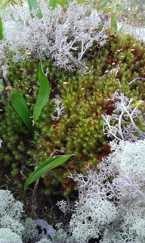 Mosses on the floor of a bog.