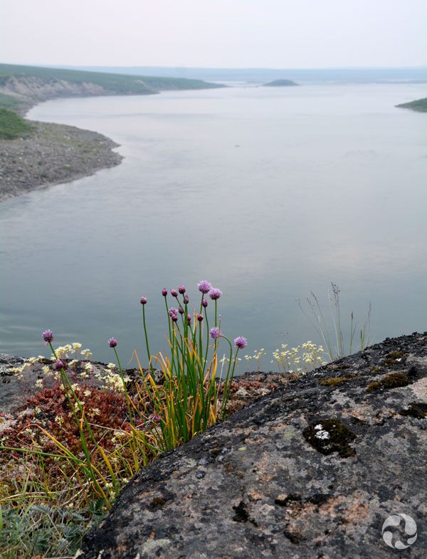 View of the river with chives (Allium schoenoprasum) in the foreground.