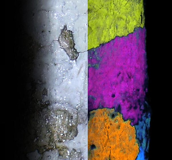 Collage: A section of lichen-covered tree trunk under white light and the same tree trunk under UV light, showing the lichens fluorescing in different colours.