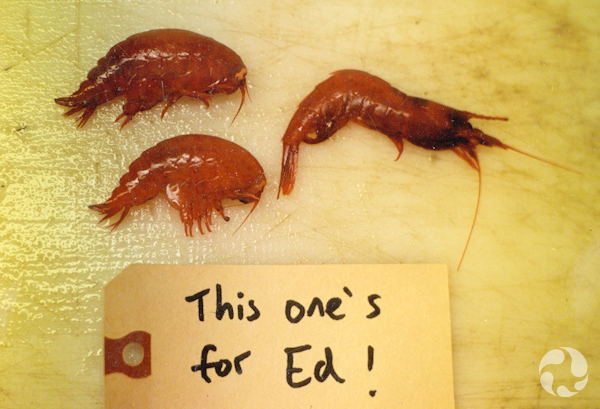 "Three specimens on a board, with a label that says, ""This one's for Ed!"""