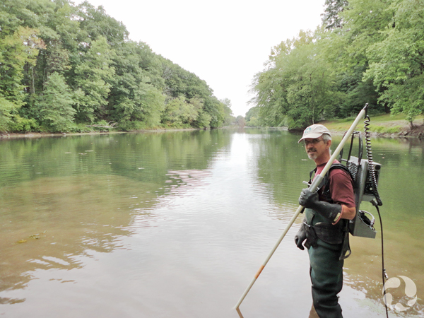 Claude standing knee-deep in water with electrofishing gear to collect lampreys.