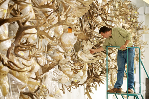 A man touches one of hundreds of antlers on a wall.