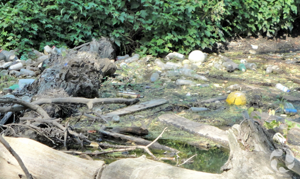Close-up of garbage caught in the logjam in the Saw Mill River.