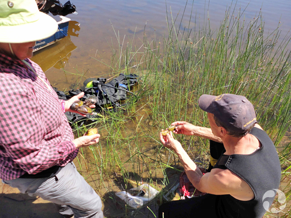 On shore, two people hold mussels in both hands.