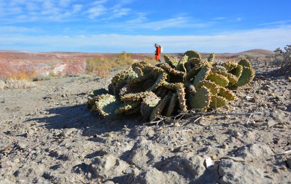 A cactus in the desert.