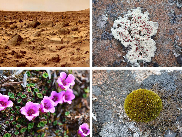 Collage: A barren, rugged landscape, lichen growing on a rock, moss on a rock, a flowering plant.