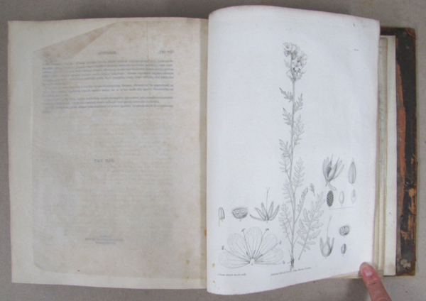 The book open to a black and white scientific illustration of a plant.