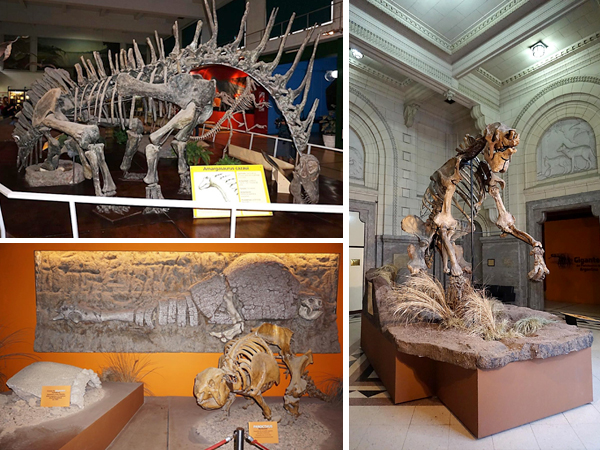 Collage of skeletons: dinosaur, glyptodont and giant ground sloth.