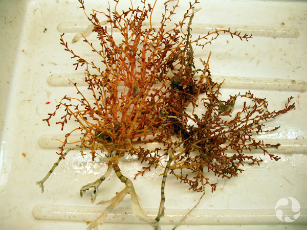 A coral specimen in the lab.
