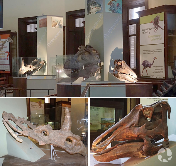 Collage: Dinosaur skulls in the museum.
