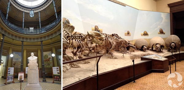 Collage: Interior of central rotunda, a fossil exhibition.