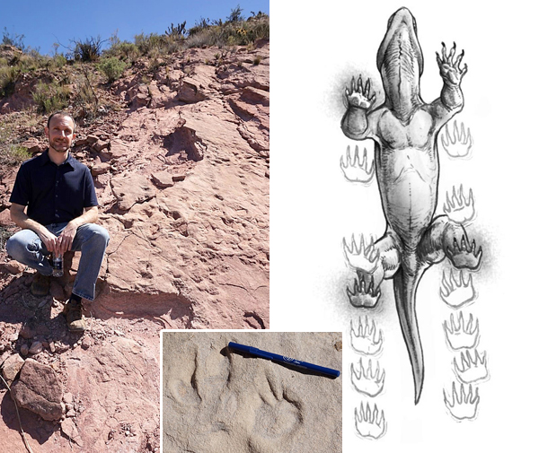 Collage: A man sits on a rocky hill, an illustration showing a Chelichnus gigas making tracks, C. gigas footprints in rock.