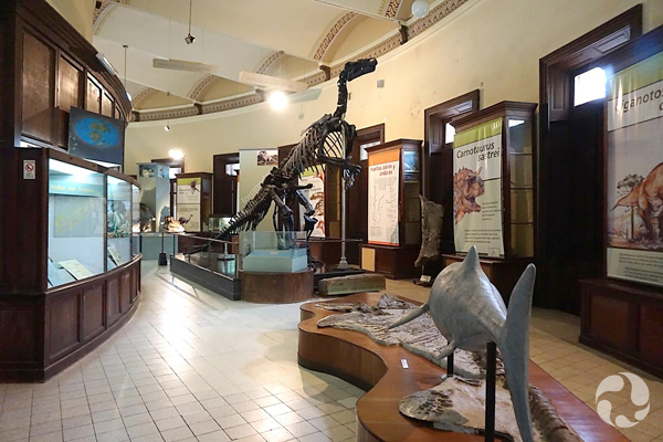View of the palaeontology gallery.
