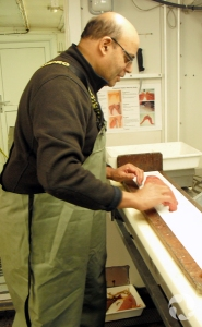 A man in hip waders stands at a counter measuring the length of a fish.